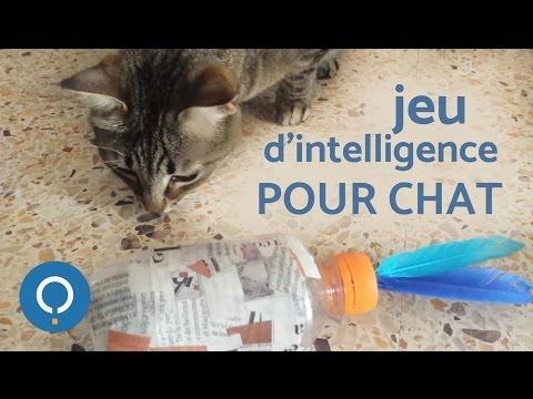 Jeu d'intelligence pour chat !