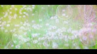 癒しの動画【たんぽぽ】 リラックスしてご覧ください。 癒しの映像館 ht...