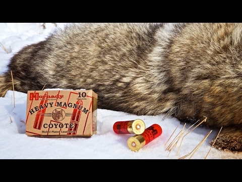 Deadliest and Best Coyote Shotgun Load and ChokeTube For Coyotes!!!