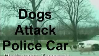 Car-Eating Dog    Police Dashcam