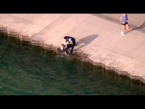 Chicago police officer rescues dog from Lake Michigan: RAW VIDEO