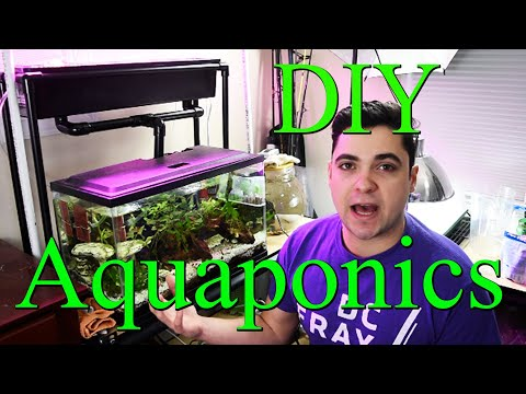 DIY AQUAPONICS System for 10 Gallon Fish Tank – Part 1