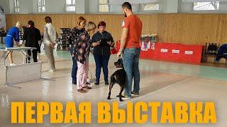 Ротвейлер Дагор на первой выставке собак, как это проходит