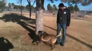 Dog Training -teach Your Dog To Bounce Off Trees