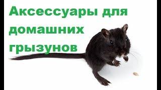 видео Ветеринарная клиника для грызунов. Ветклиника для грызунов.