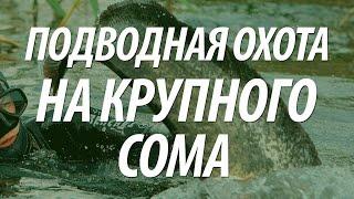 Крупная рыба сом. Подводная охота на сома(В видео, подводная охота на крупного сома. https://www.youtube.com/watch?v=hKZg-0lW95A., 2015-07-18T17:22:31.000Z)