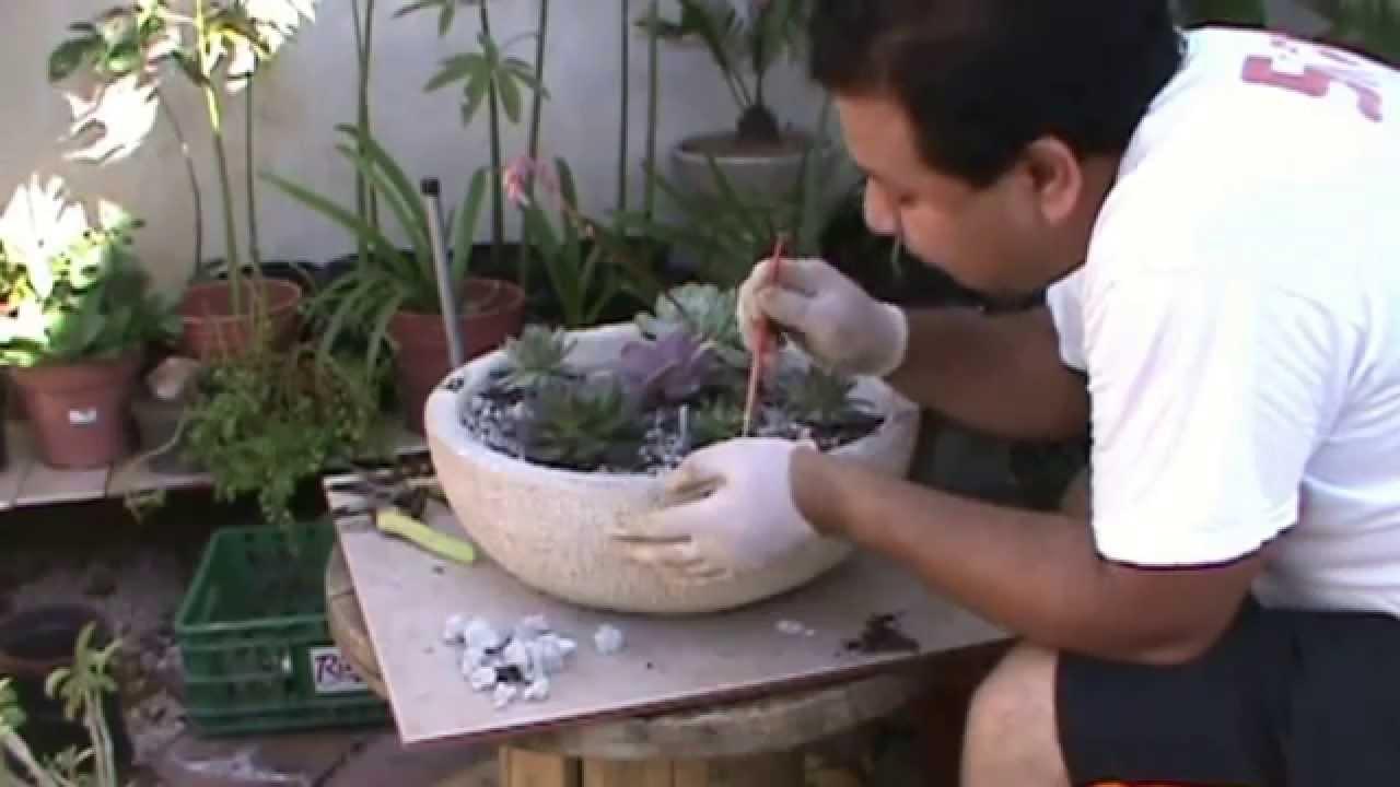 Suculentas terrario youtube - Como construir un terrario ...