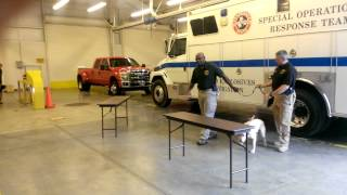 New Accelerant-detecting Dogs Commissioned