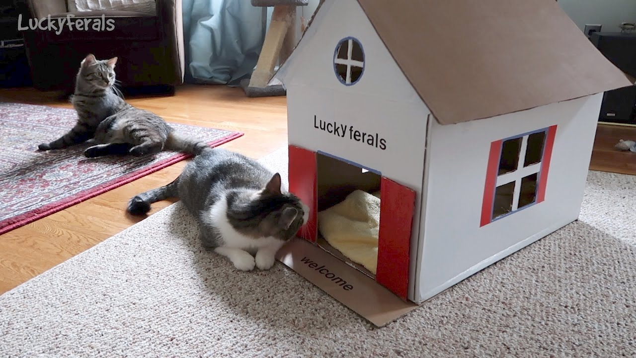 Making A Cat House Out Of A Cardboard Box