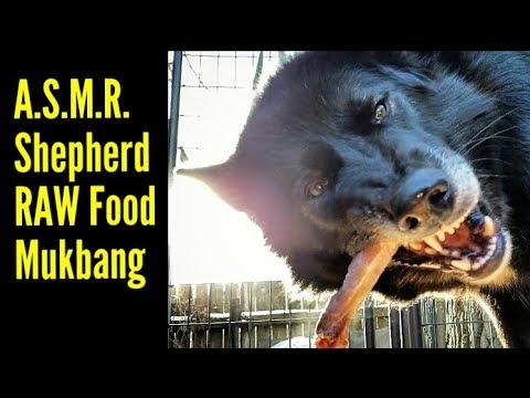 ASMR - Shepherds Eats RAW Turkey Carcass - K9 Mukbang