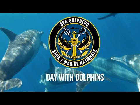 Operation Albacore: A Day With Dolphins