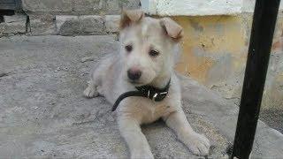 Голодный и уставший щенок заглядывал девушке в глаза, надеясь, что она его покормит и приютит