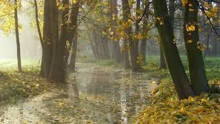 Осенний релакс Музыка дождя Звуки природы Autumn relaxation Music of the rain Sounds of nature