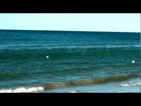 № 1684 Доброе утро 27 ноября 2011  на пляже St.Pete beach Fl