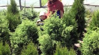 Можжевельник. Посадочный материал собственного производства.(Добрый день! Мы занимаемся выращиванием и продажей растений для ландшафтного дизайна. В ассортименте собст..., 2014-07-02T15:34:14.000Z)