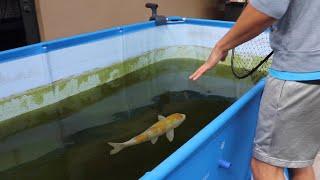 Saving Fish From BLACK Tar Water Aquarium!!