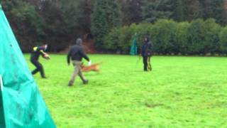 Ipo Essex Club Dog Training