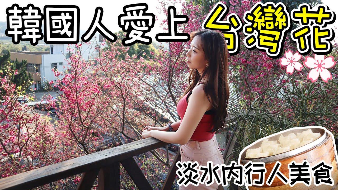 [여행旅行]淡水内行人美食!/韓國人超愛看台灣花/대만에서 꽃놀이~/단수이 로컬맛집