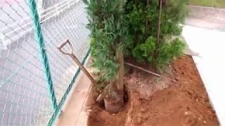 180615 庭木の植え方①列植