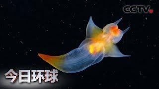 [今日环球] 俄潜水员冰下拍到裸海蝶 美如精灵 | CCTV中文国际