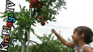 Picking Apples at Solebury Orchards with Mom and Dad |  Pick Your Own Farm in New Hope PA