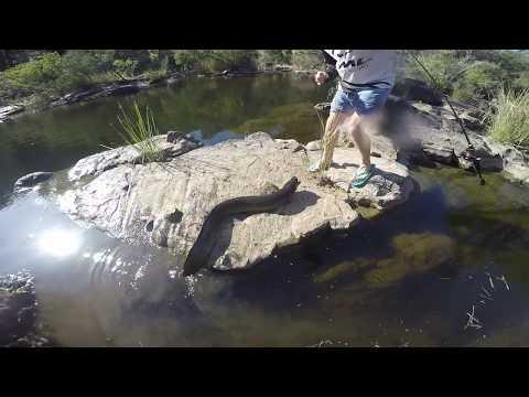 HUGE EEL BITES ME!. Hooked on rod and fishing lure