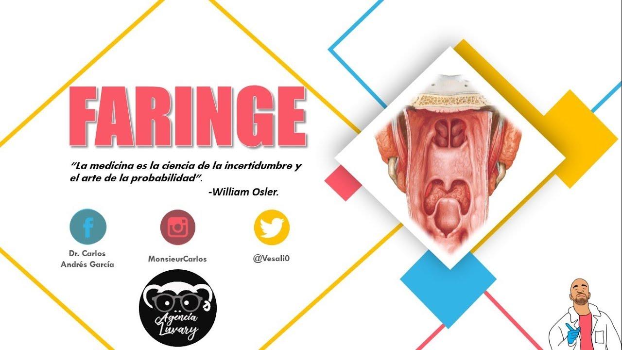 Anatomía - Faringe Pt. I (Naso, Oro y Laringofaringe, Vasos y ...