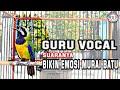 Suara Tembakan Kasar Burung Cucak Cungkok Gacor  Mp3 - Mp4 Download