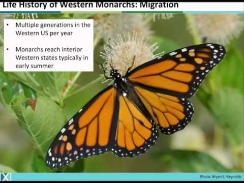 Conservation of Monarchs in the Western US