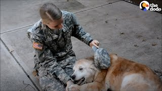 Soldiers Come Home to Dogs Compilation | The Dodo
