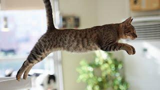 Funny Cats Jump Fail - Part 1
