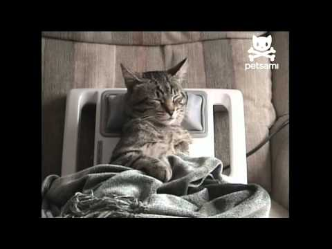 stressed-out-kitty-gets-relaxing-massage
