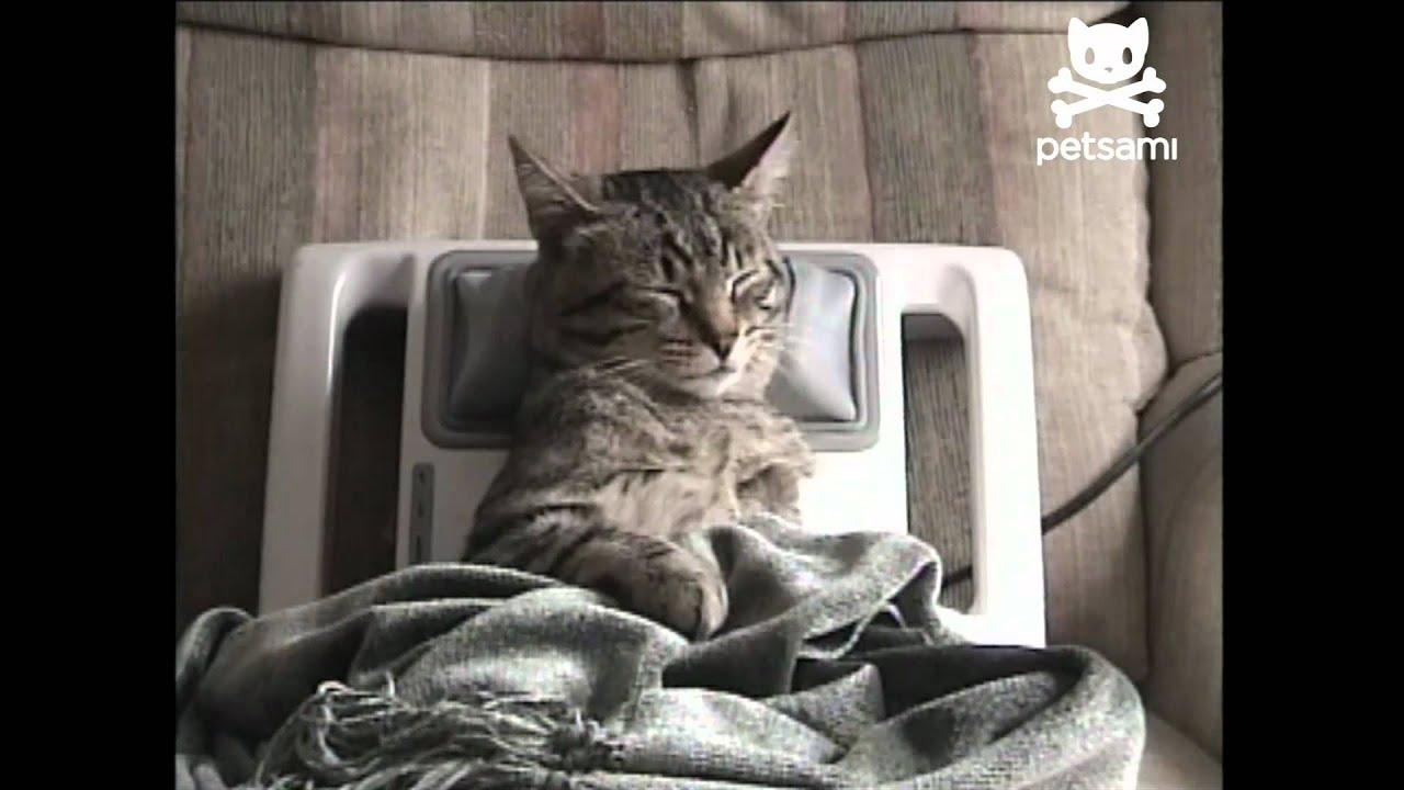 Pet Interiors Kattenmand Rondo Wall Vilt as well Hilo1 in addition A Cute Catbox Finally further Tutorial Diy Modern Cat Scratcher Ikea Hack in addition Infinity Cat Scratcher Lounge. on cat scratching furniture