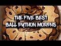 The five best ball python morphs!