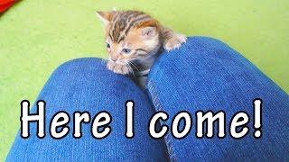 Kittens Climbing Up Legs