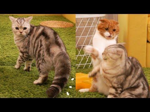 수리노을 고양이들 역대급 대형참사 TT 선물을 줬을 뿐인데..