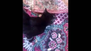 Семейство черных котов!!!