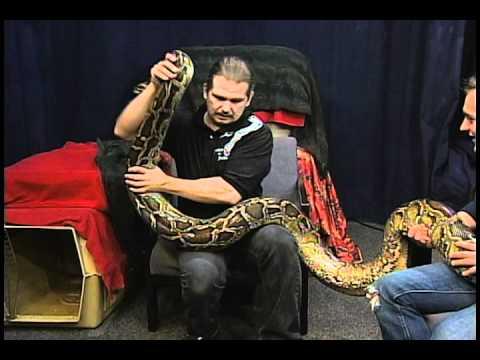Hernia the Python
