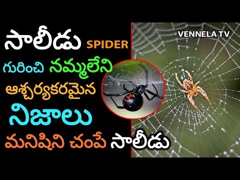 Unknown Facts About Spider   Types Of Spiders   Toxic Spider Types   Interesting Facts   Vennela TV