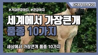 세계에서 가장 큰개 세상에서 가장 큰게 10