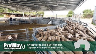 ProWay Sheepyards and Bulk Handler - Superior Wool Merinos, Tintinara, SA