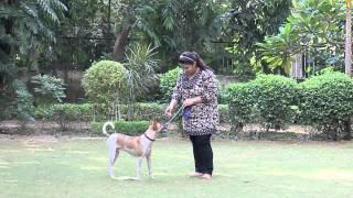 Nirvana Kennels - How To Train Your Dog To Sit