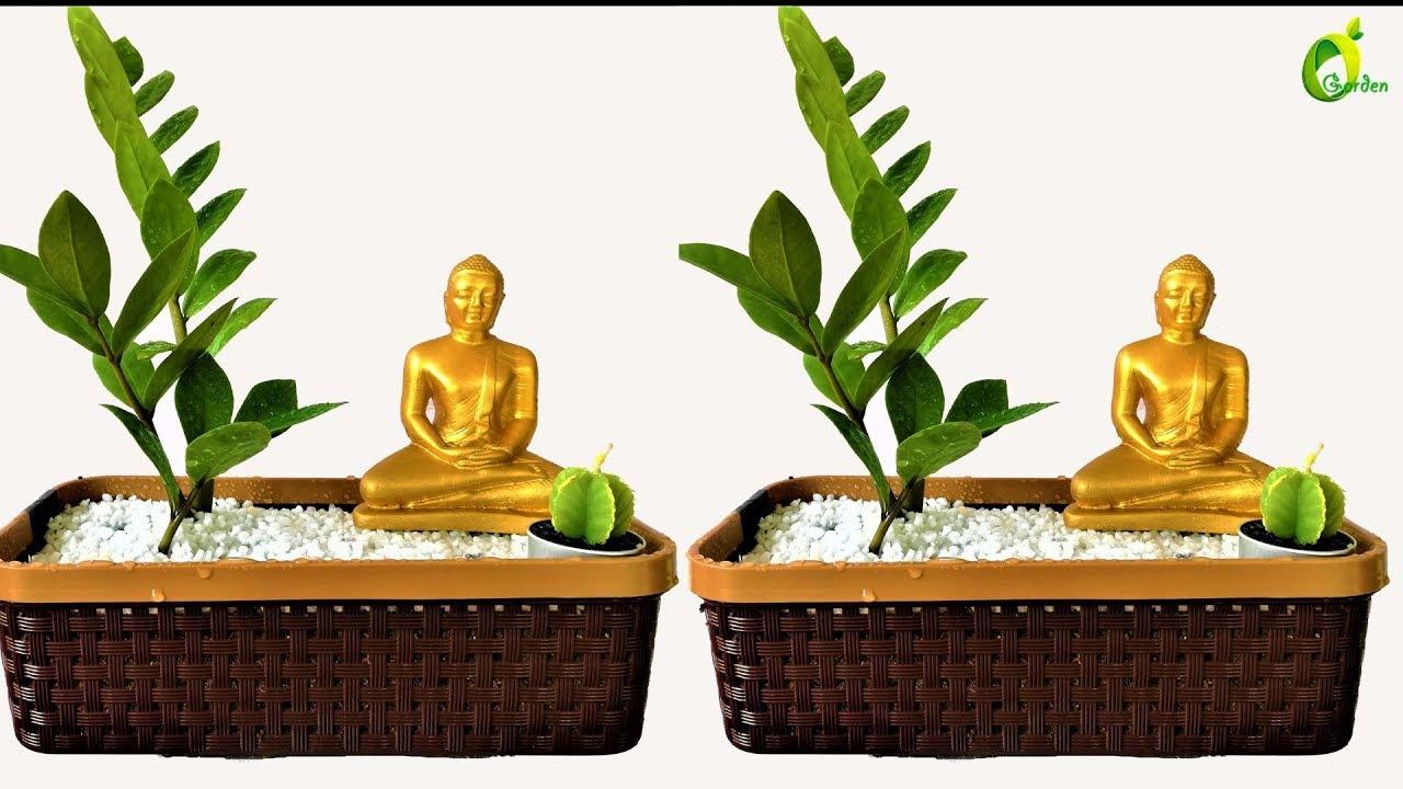 Sansevieria Plant Feng Shui zz plant decoration/lucky plants ideas/buddha feng shui ideas/organic garden