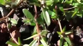 El Jardín de Ordóñez - trailer
