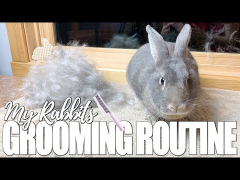 My Rabbit's Grooming Routine