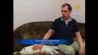 """Кот-""""десантник"""", или нерадивые хозяева"""