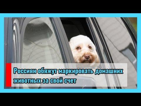 �� Россиян обяжут маркировать домашних животных за свой счет