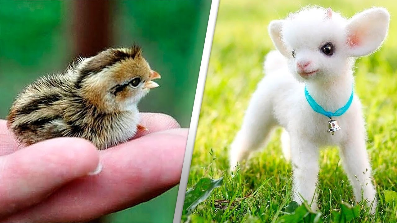 12 Милейших Детей Животных - YouTube
