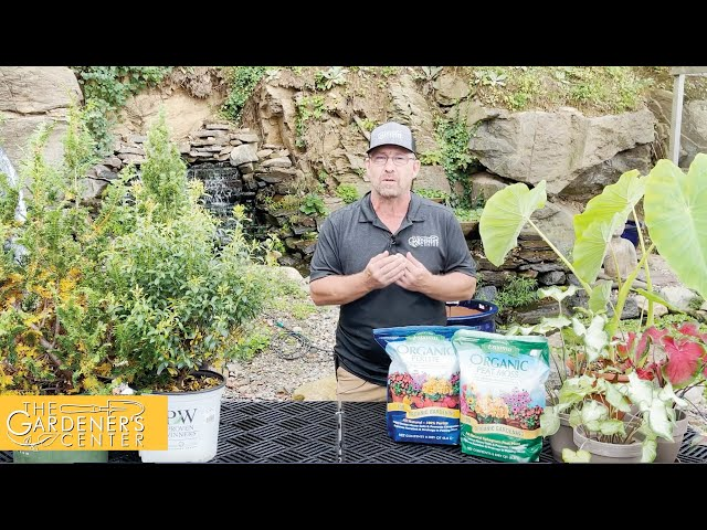 10/13/2021 Common Fall Garden Questions with Sean