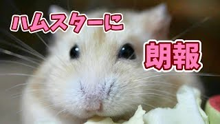 【チャンネル登録ありがとうございます】 http://www.youtube.com/c/cho...